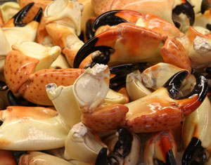 Fresh Stone Crabs in Miami